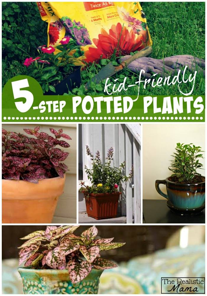 Kid Friendly Potted Plants - Step-by-Step Instructions