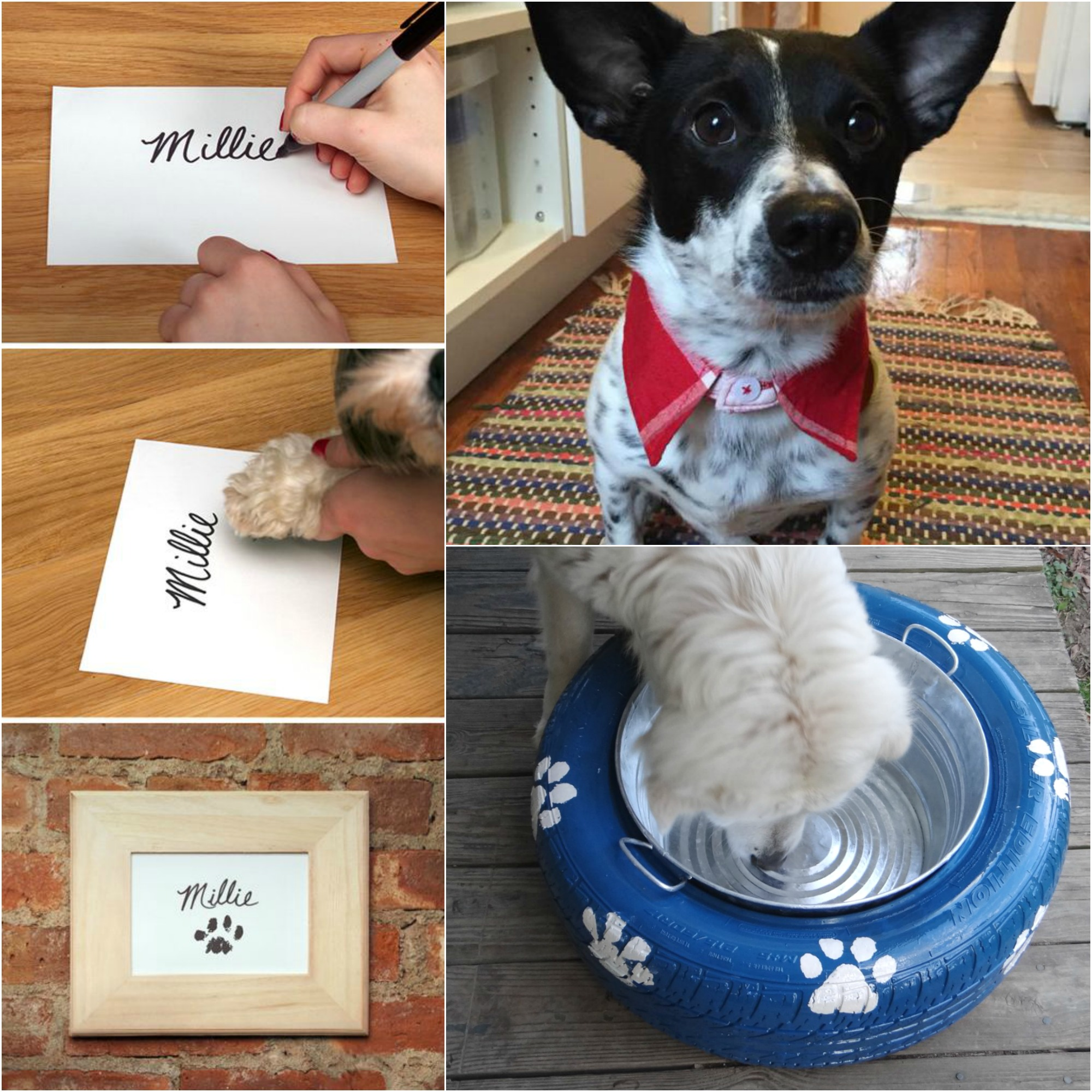 Ruggy Diy Dog Bed: 10 DIY Projects For Dog Lovers